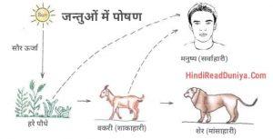 जन्तु पोषण क्या है, jantu poshan, animal nutrition