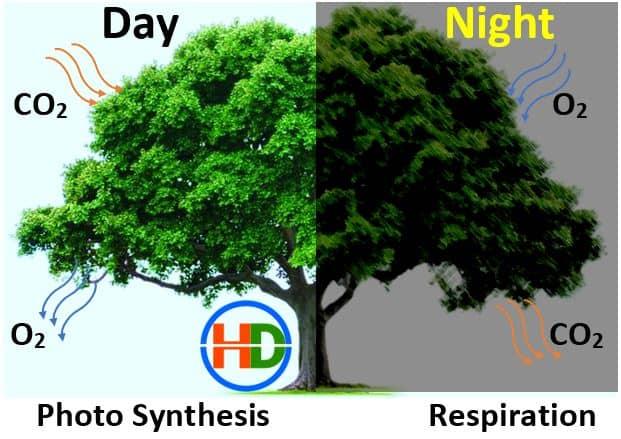 पेड़ रात को कौन सी गैस छोड़ते है