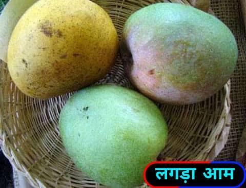 लंगड़ा आम / Langda mangoes.