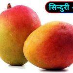 आम का पेड़ कितने सालों में फल देता है