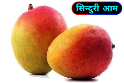 सिंदुरा / Sindura Mangoes.