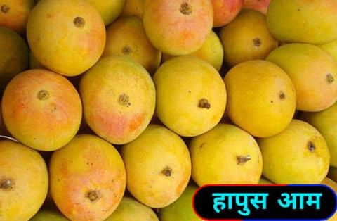 हापुस आम / Hapus Mangoes.