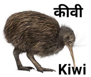 Kiwi कीवी