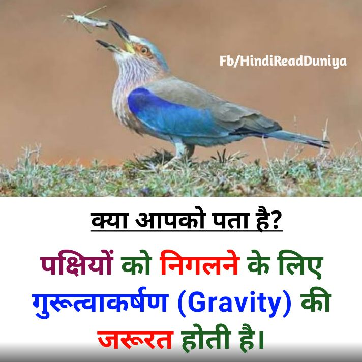 पक्षियों को भोजन निगलने के लिए किसकी जरूरत होती है?