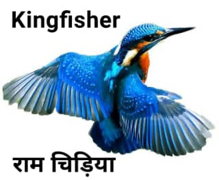 Kingfisher राम चिरैया