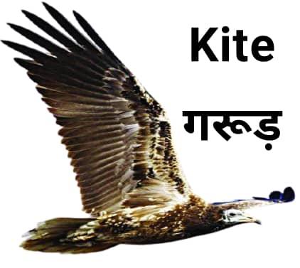 Kite गरूड़