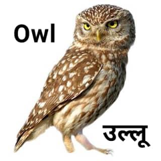 Owl उल्लू