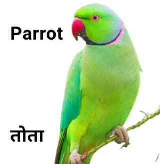 Parrot तोता