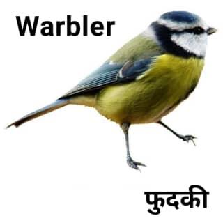 Warbler-फुदकी