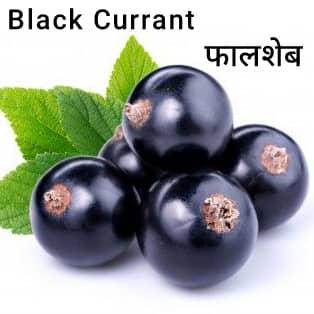 Black-Currant-फालशेब