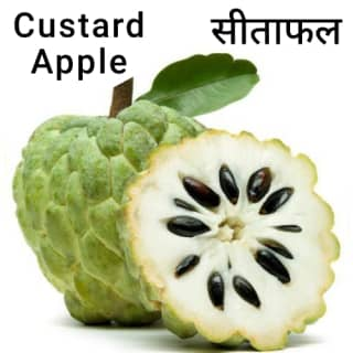 Custard-Apple-सीताफल