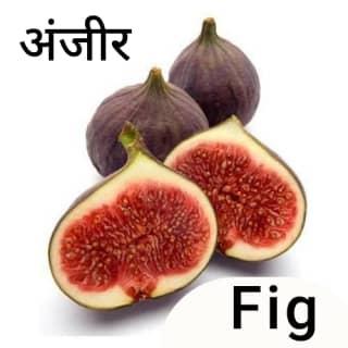 Fig-अंजीर