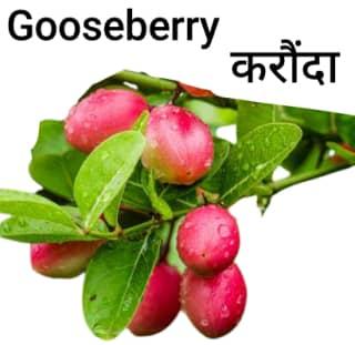 Gooseberry-करौंदा