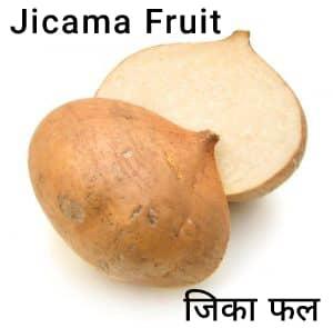 Jicama-fruit-जिका-फल