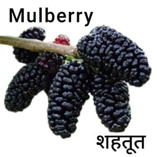Mulberry-शहतूत