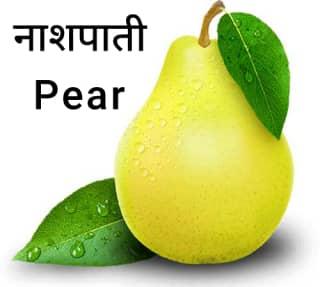 Pear-नाशपाती