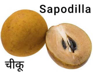 Sapodilla-चीकू