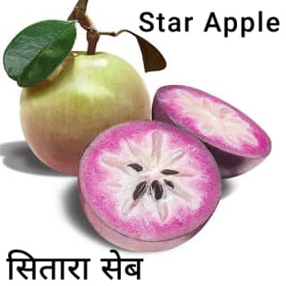 Star-apple-सितारा-सेब